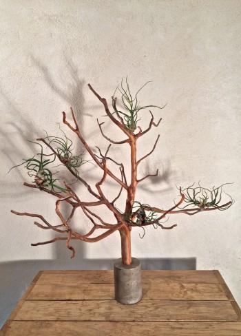 arbre de Cade N°5