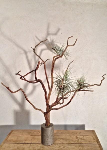 arbre de Cade N°8
